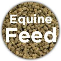 Equine Feed & Supplements