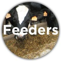 Dairy Feeders and Waterers
