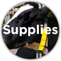 Dairy Supplies