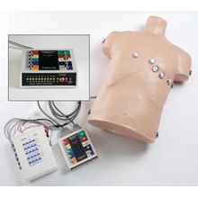 12-Lead ECG Placement Trainer