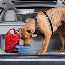 Kibble Carrier Dog Travel Food Container