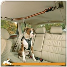 Leash and Zipline Dog Vehicle Restraint
