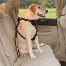 Direct to Seatbelt Tether Car Restraint for Dogs
