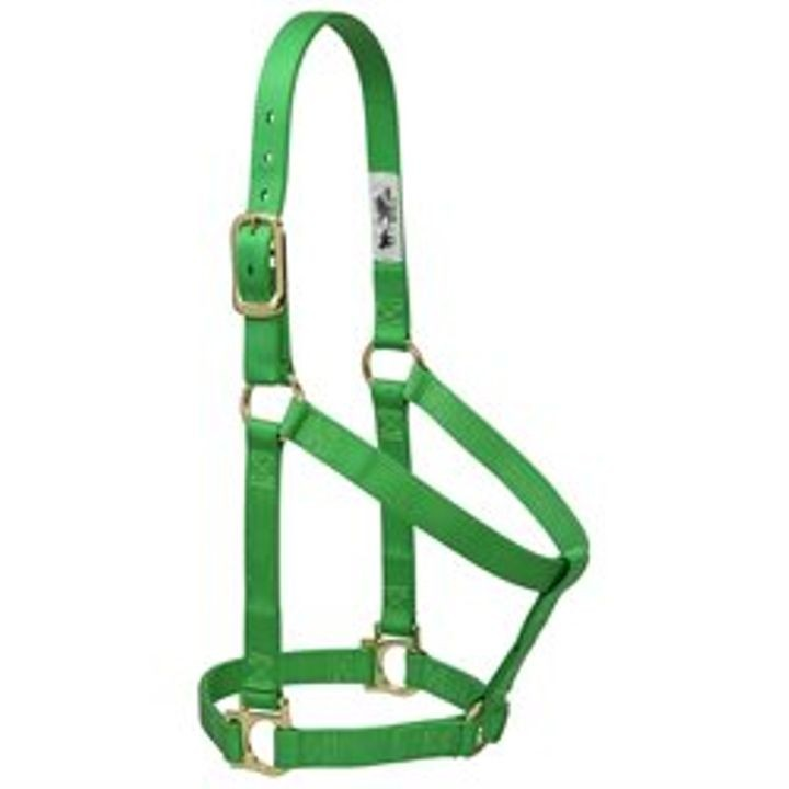 "1"" Basic Leather Non-Adjustable Halter"