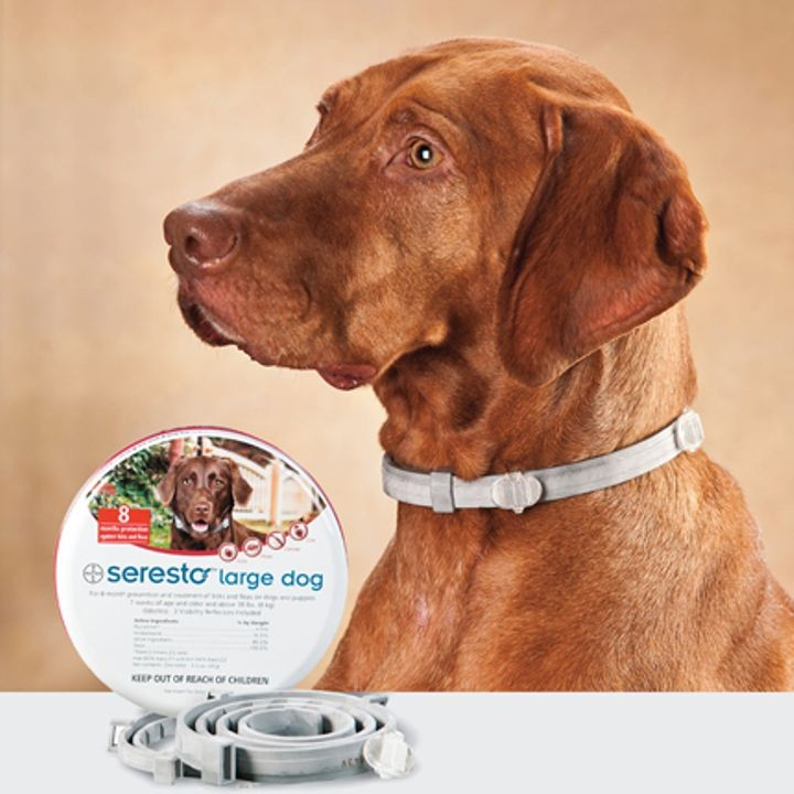 Flea & Tick Collar For Dogs