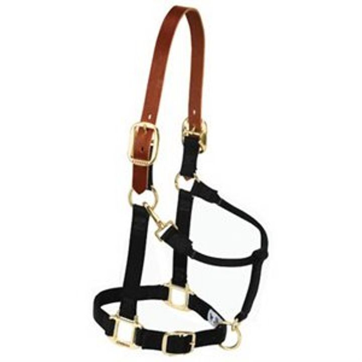 "1"" Nylon Breakaway Halter for Average Horse - Black"